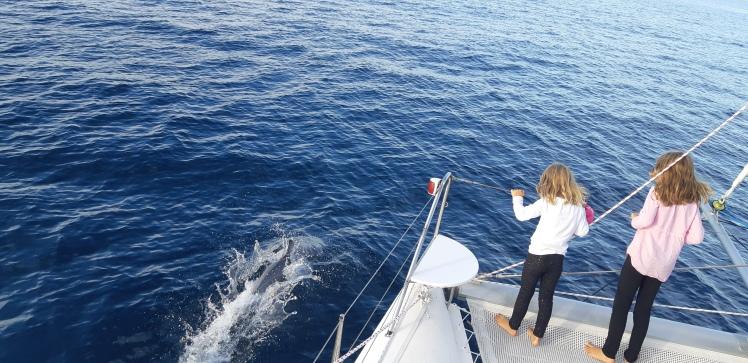 marlborough sounds, dolphins, sailing
